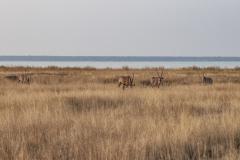 Orix Pan Landscape Etosha National Park Kunene Region Namibia