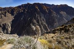 Colca Canyon Landscape Perù