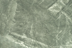 The Tree Nazca Lines Geoglyphs Aerial Perù