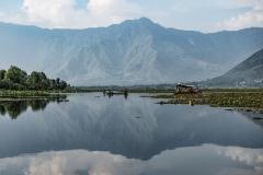Dal Lake Landscape Srinagar Kashmir India