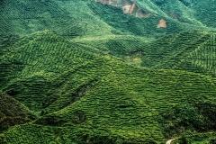 Cameron Highlands' Tea Plantations Malaysia