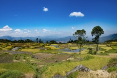 Terraced Rice Fields Sulawesi Indonesia