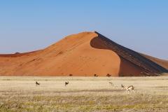 Dune 45 Sossusvlei Namib Naukluft National Park View Namibia