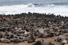 Sea Lions Cape Cross Skeleton Coast Landscape Namibia