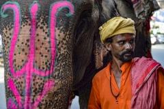Mahout whith his Elephant Chandigarh Punjab India